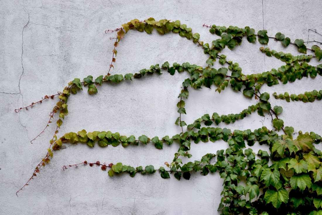 green leaf on white wall